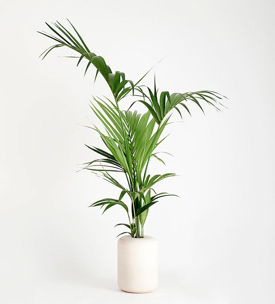 ceramica-plantas-alicia y xenia-bas (1)