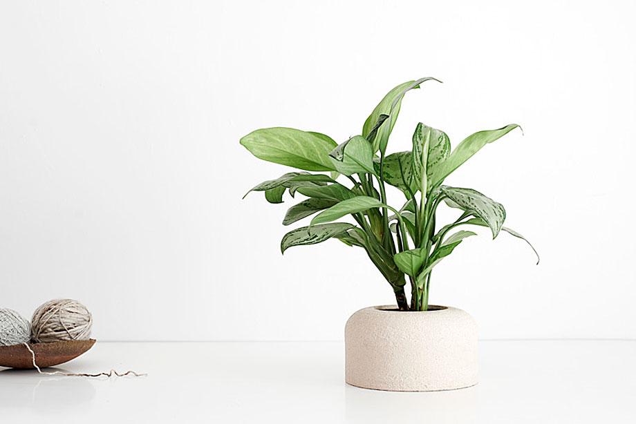 Macetas cuna de bas artesan a y dise o meditado for Plantas de exterior para macetas