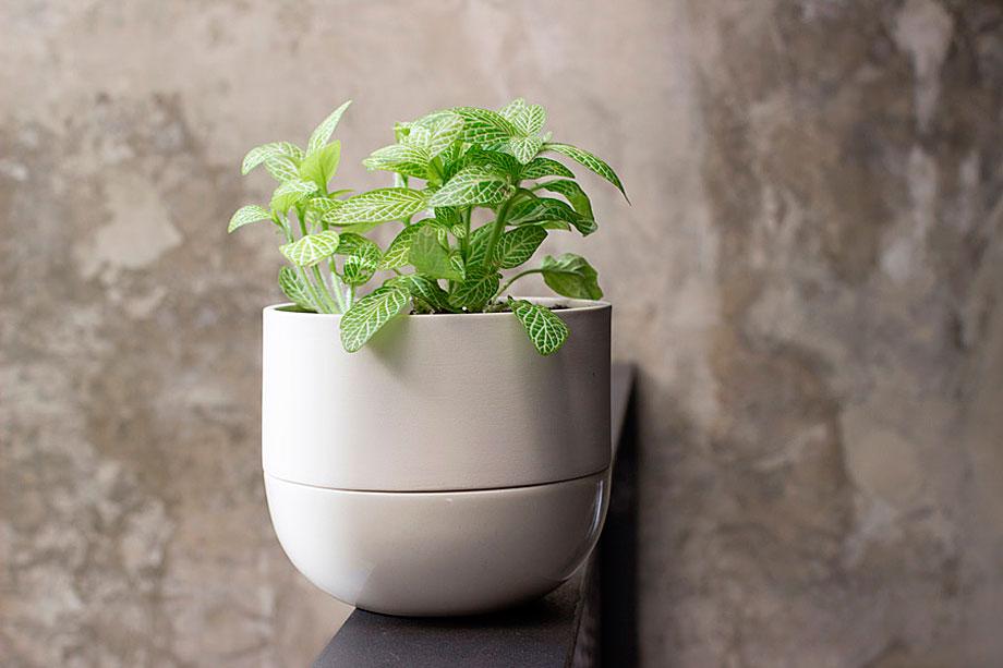 ceramica-plantas-alicia y xenia-bas (8)