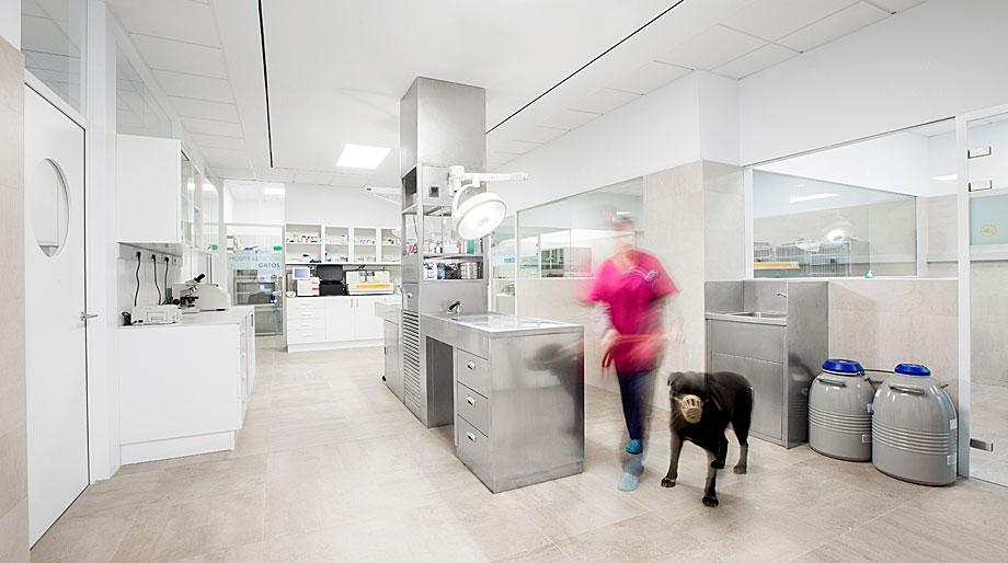clinica-veterinaria-constitucion-dobleese (13)