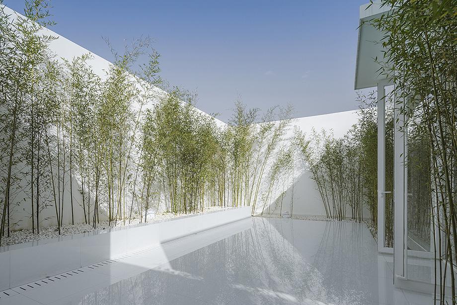 jardin de bambu en la terraza de v studio (2)