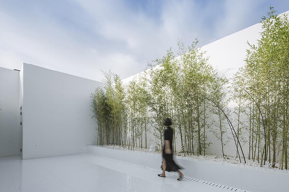 jardin de bambu en la terraza de v studio (3)